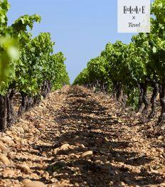 Tavel: le Top9 des meilleurs vins de ce vignoble écrin