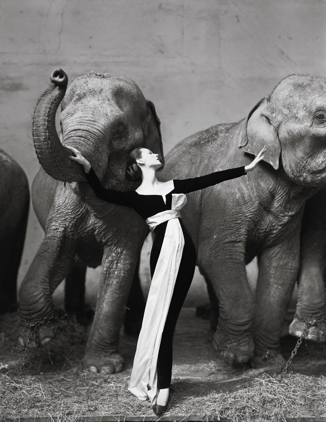 dovima-with-elephant