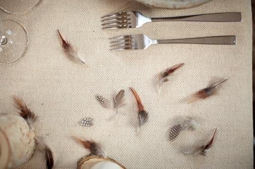 Photo d'une nappe beige avec plumes éparpillées.