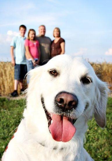 portrait de famille chien