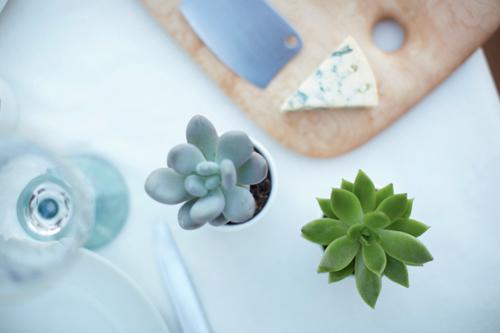Plantes grasses sur une table