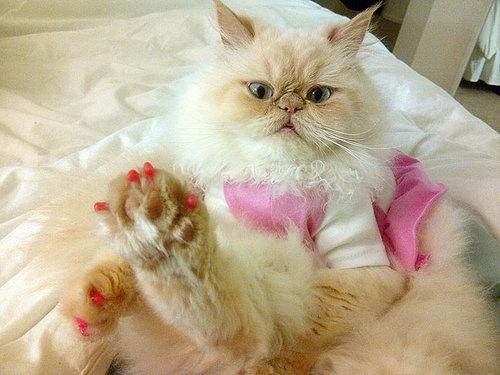 Luna The Fashion Kitty porte du vernis.