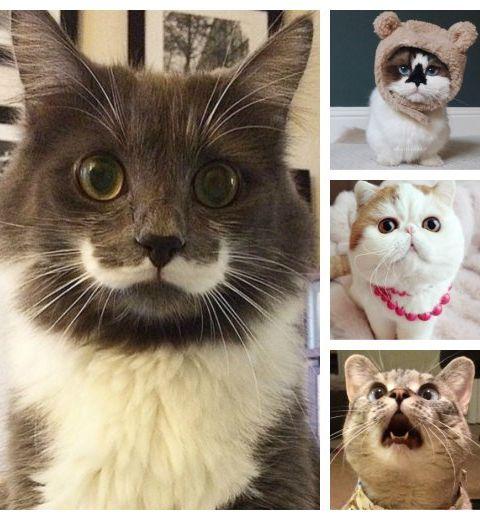 Top 10 des chats les plus célèbres
