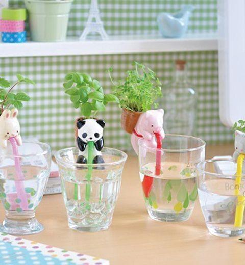 Les Chuppons : quand le Japon fait pousser vos plantes