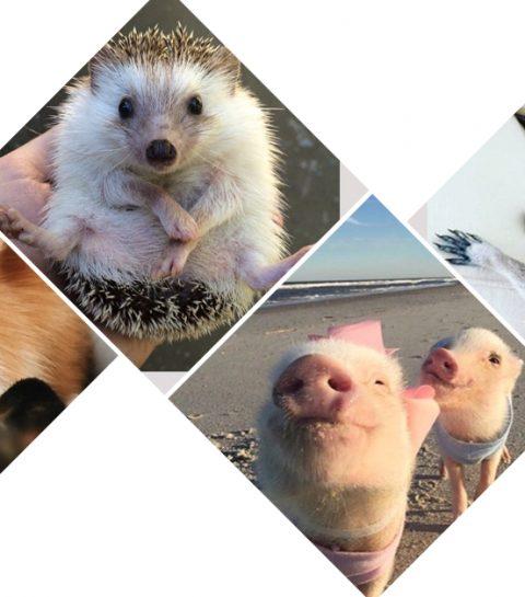 Les 5 animaux les plus mignons d'Instagram