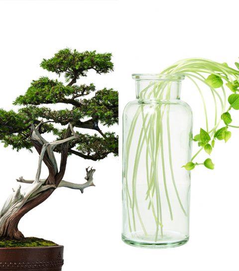 8 plantes dépolluantes à caser chez soi