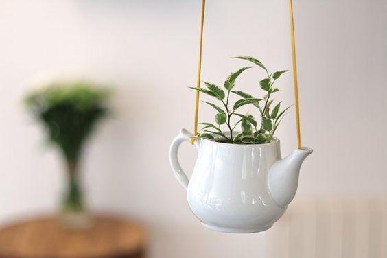 Dans une théière recyclées en pot de fleurs.