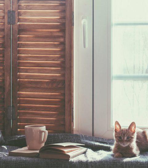 Que faire de votre chat ou de votre chien pendant vos vacances?
