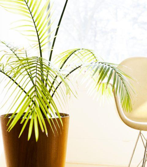 Les plantes d'intérieur increvables