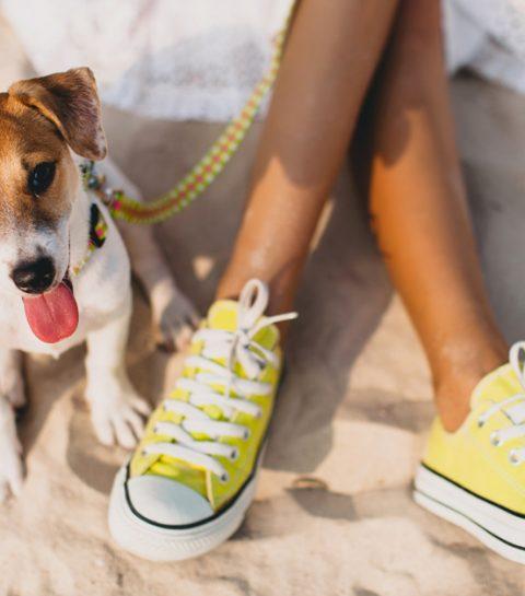DOGOBOX lance la box cadeau pour chiens