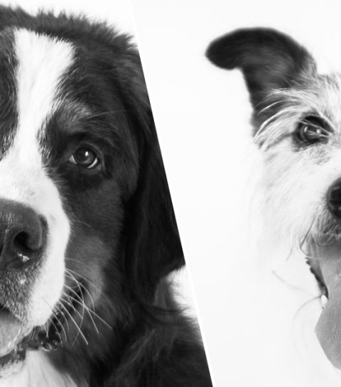 Shoot my dog: le cadeau idéal pour les amoureux de leur chien