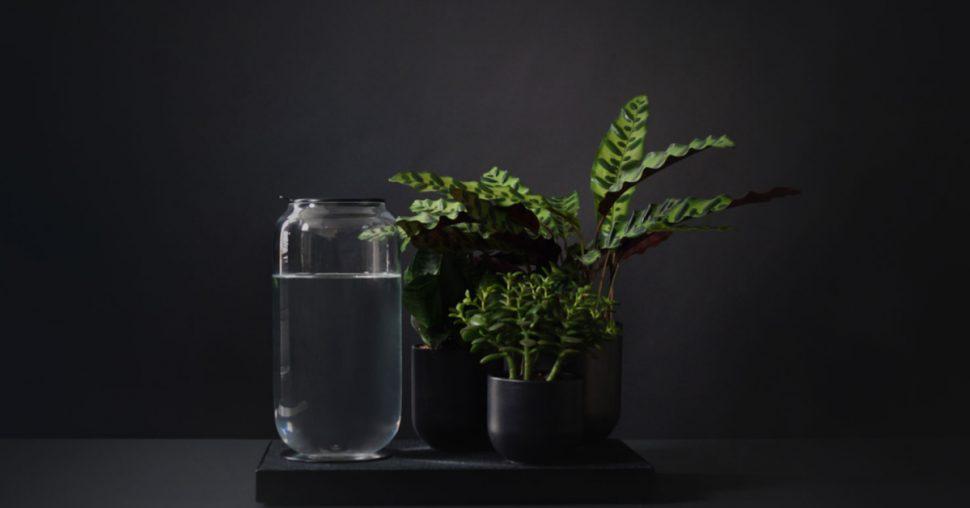 Pikaplant: la plante d'intérieur qui vous veut du bien