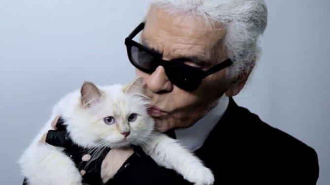 ON LES VEUT: Les lunettes de soleil chat signées Karl Lagerfeld - 1