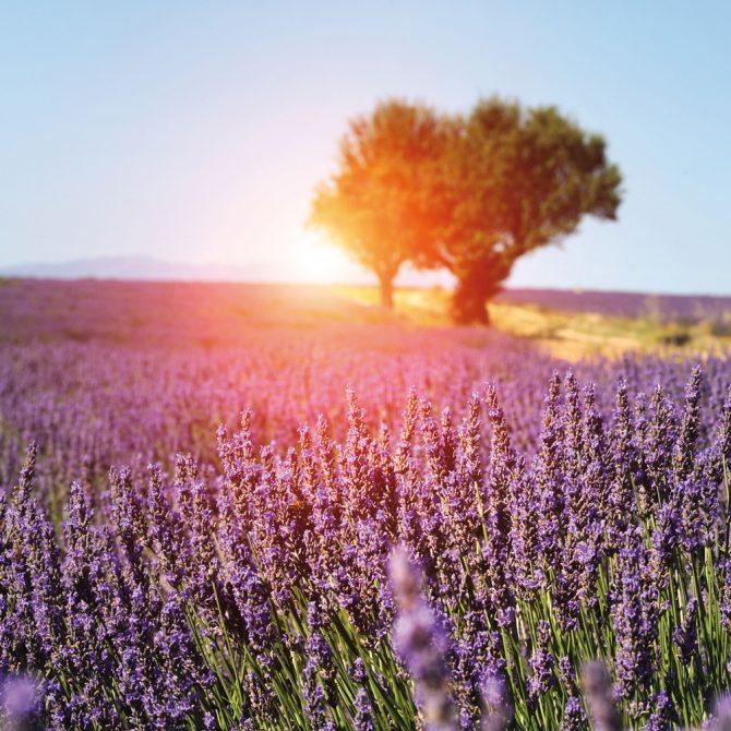 Domaine de Manville: l'adresse parfaite pour se ressourcer en Provence - 16