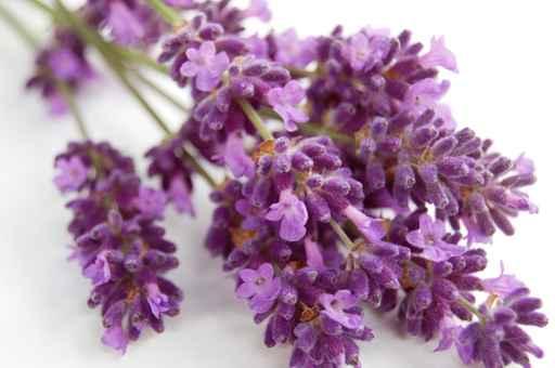 Huiles essentielles : soigner 5 bobos de l'été - 1