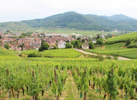 Qui sont les DIVINES d'Alsace ?