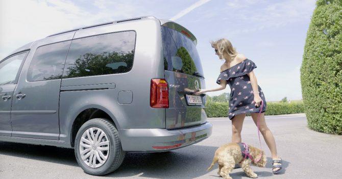 Comment bien attacher son chien en voiture ? - 1