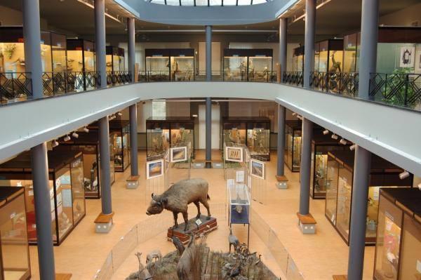 agenda du week-end : musée des sciences naturelles à Mons