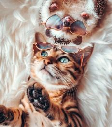 Instagram : les 5 comptes d'animaux les plus cute à suivre pour une bonne dose de feel good