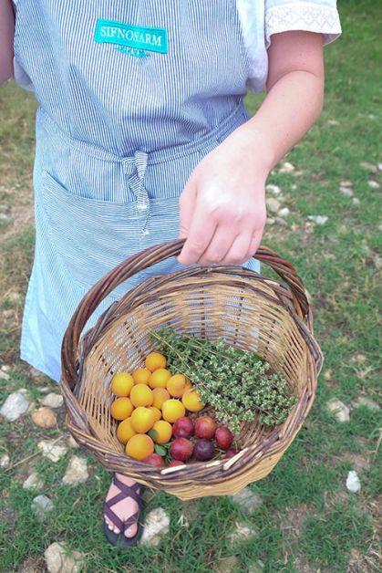 photo de notre panier à la ferme Narlis à Sifnos