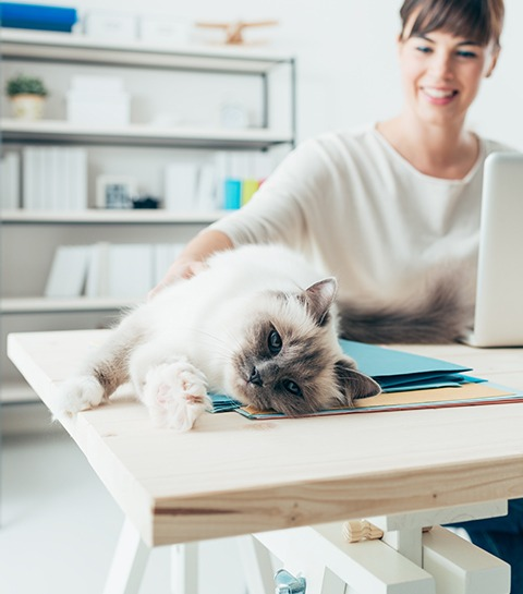 Animaux au bureau : sont-ils la solution pour lutter contre le stress ?