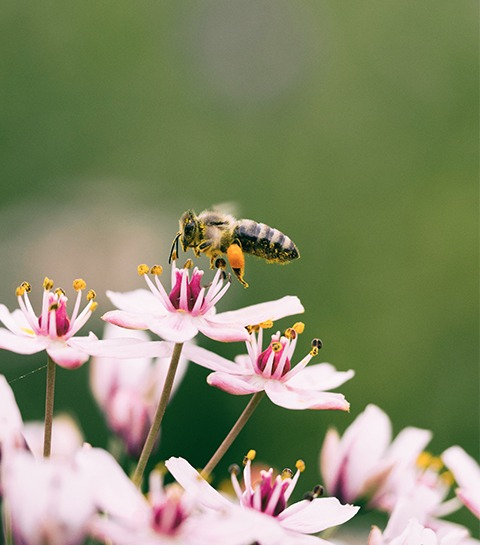 NUXE x Le Louvre : une jolie collaboration pour protéger les abeilles
