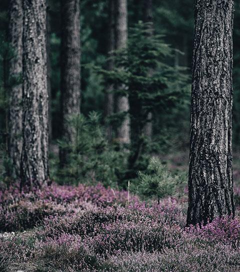 La vie secrète des arbres: le roman fascinant qui nous fait voir la vie autrement