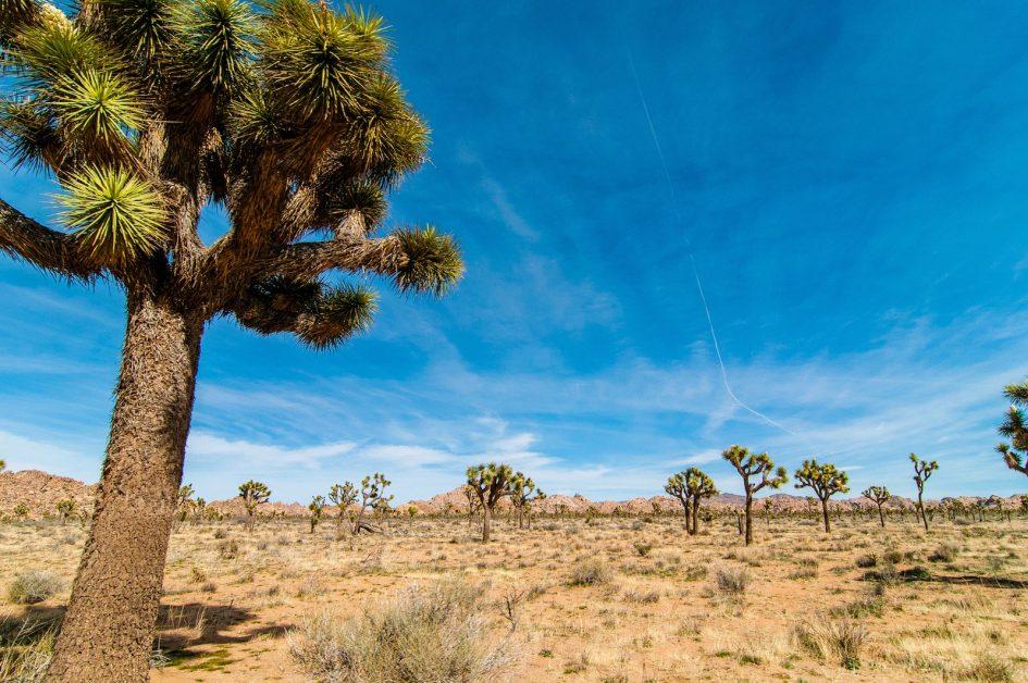 Palm Springs : quels sont les lieux de résidence préférés des stars ? - 12