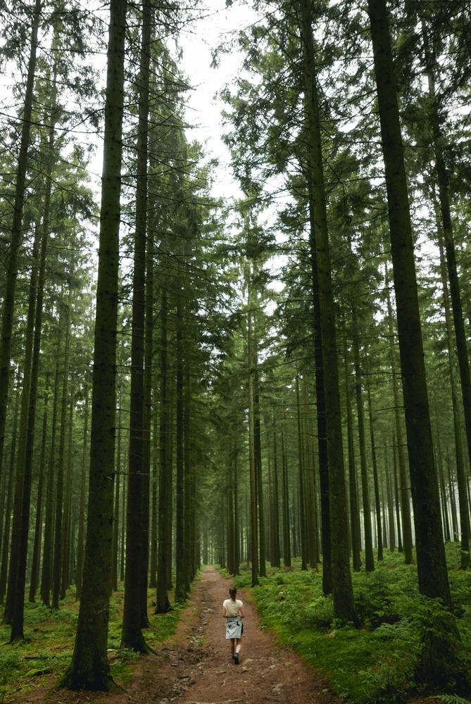 Week-end insolite - Balade en forêt