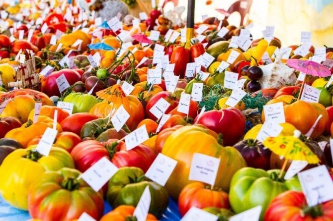 ferme-no-pilifs-tomates
