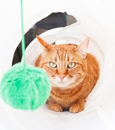 Vivre comme un chat, le secret du bonheur ?