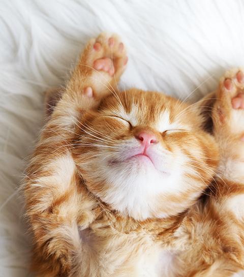 Hôtel Marshou : la pension pour les prochaines vacances de votre chat