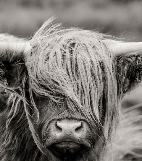 6 documentaires sur le bien-être animal à voir absolument