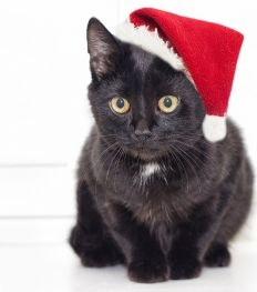 Wishlist : j'offre quoi à mon chat pour Noël ?