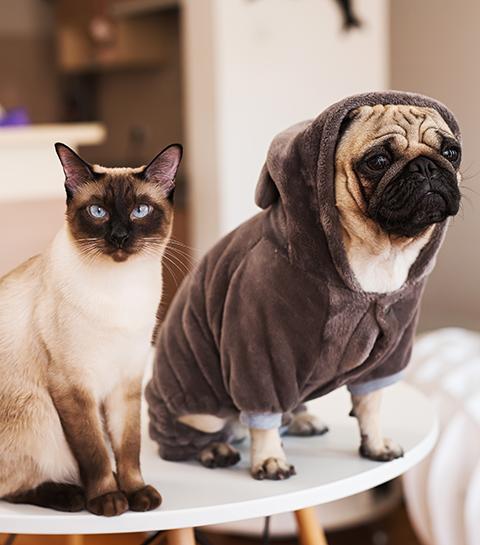 Comment trouver le dog ou cat sitter parfait ?