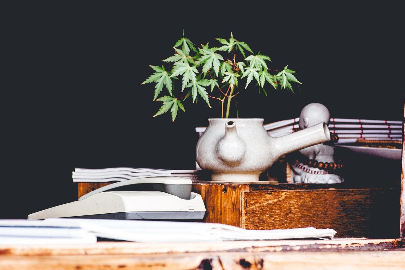 tisane cannabis