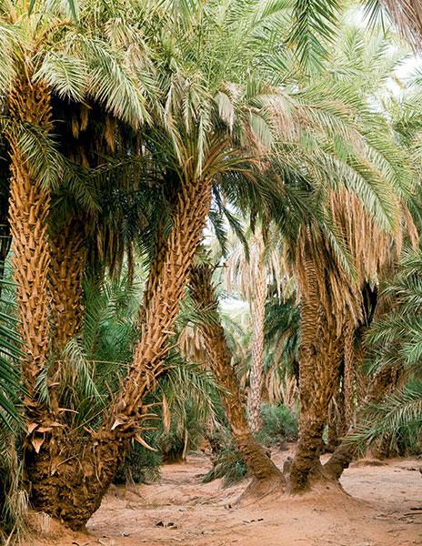 Découverte du désert de l'Adrar : le voyage d'une vie - 2