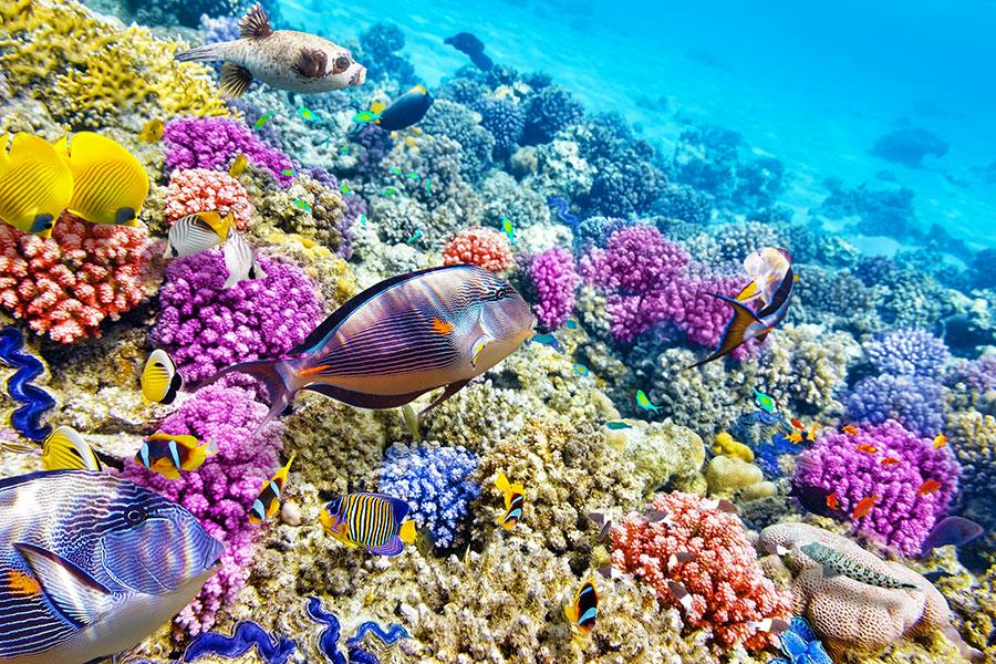 Des poissons colorés et du corail.