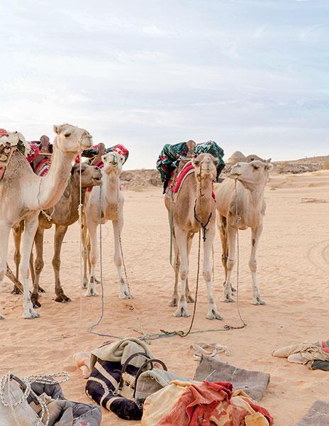 Découverte du désert de l'Adrar : le voyage d'une vie - 6