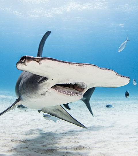 8 voyages incroyables pour découvrir la faune sauvage