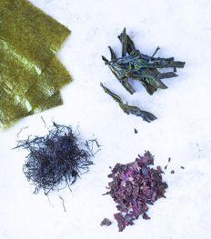 Comment cuisiner les algues au quotidien ?