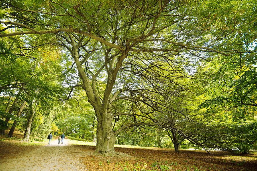Photo d'arbres prise dans le Arboretum Arnold parc à Boston.