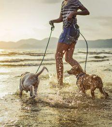 Comment limiter le surpoids chez le chien ?