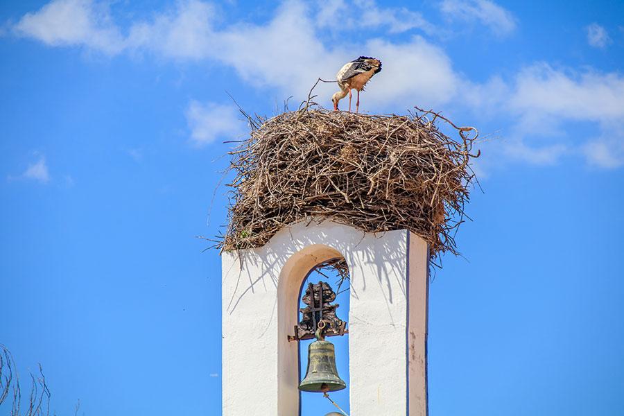 Oiseau nichant au sommet d'une église à Comporta au Portugal.