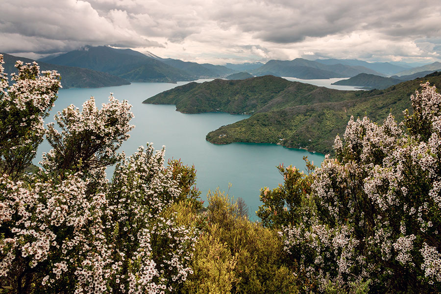 Paysage de Nouvelle-Zélande où pousse la fleur du Manuka dont est extrait le miel de Manuka.