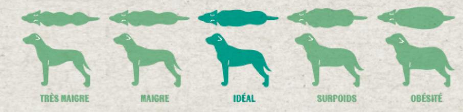 Comment limiter le surpoids chez le chien ? - 1