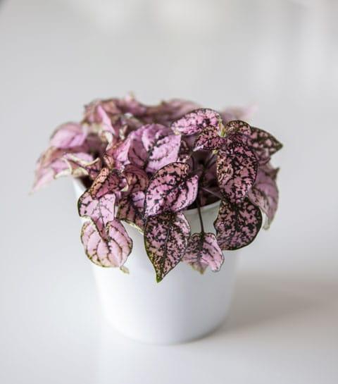 10 plantes roses qui vont faire buzzer votre intérieur