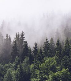 Comment agir au quotidien contre le changement climatique ?