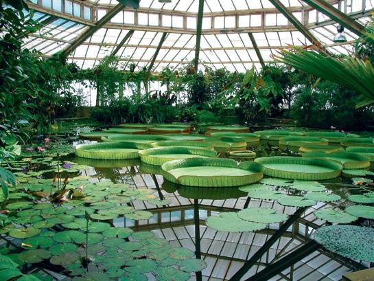 Activités à proximité - Le jardin botanique de Meise