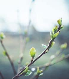 La gemmothérapie: l'alternative pour se soigner au naturel
